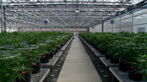 Hydropothecary cannabis expansion plans to put it among top producers in Canada