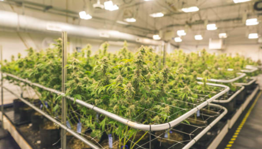 Aphria buying Broken Coast Cannabis for $230 million in stock and cash
