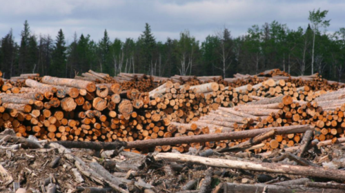 Unifor reaches tentative deal with Resolute Forest Products to set pattern