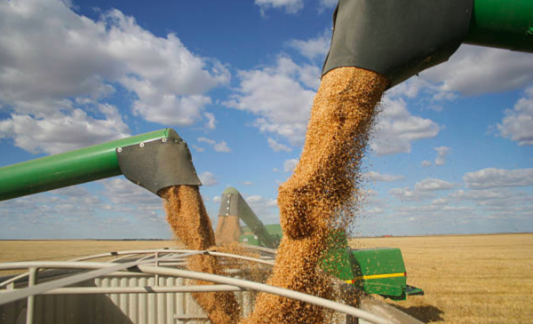 South Korea joins Japan in halting Canadian wheat imports after GMO plants found