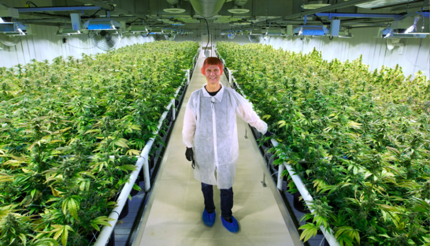 Aurora Cannabis Q2 revenues surge as it captures 20 per cent of Canadian sales