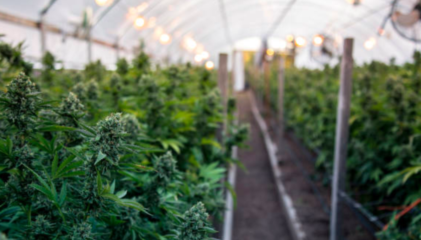 Aurora-CanniMed $1B cannabis deal puts pressure on competitors