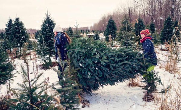 """Everyone wants a tree and they want it now"": Christmas tree sales on pace for record"
