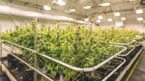 Aphria reports $5.1M first-quarter loss compared with $16.4M profit a year ago