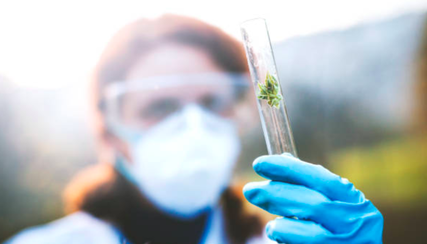 Organigram invests in firm that can produce cannabis' active ingredients in lab