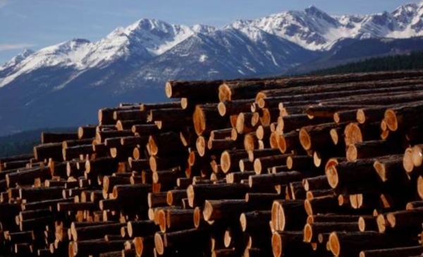 West Fraser results far below expectations as lumber prices, duties bite