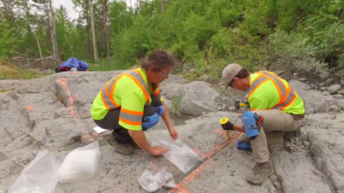 First Cobalt to acquire US Cobalt in a friendly stock deal amid growing interest