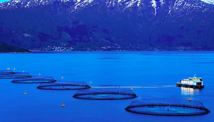 Fish farm companies in B.C. should get First Nations approval: report