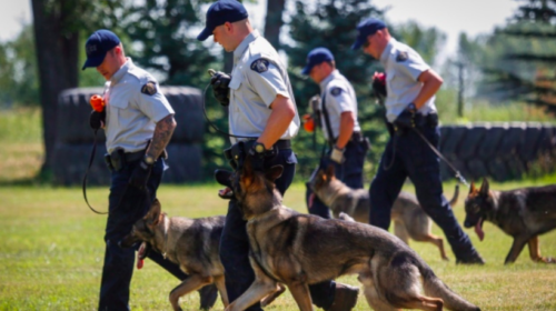 Feds to boost G7 security by flying in 3,000 officers, German shepherds