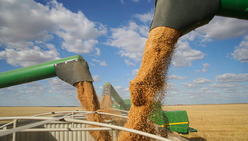 Ottawa says Japan has resumed Canadian wheat imports after temporary suspension