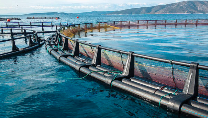 Federal government and First Nations to approve B.C. fish farms: province