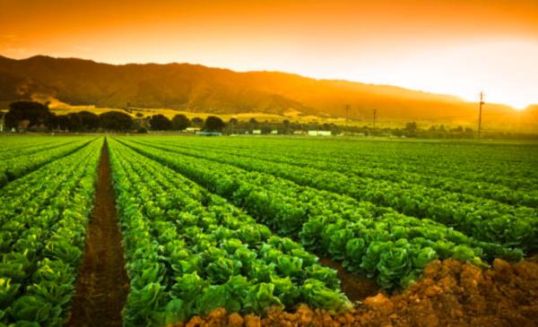 California bans pesticide linked to brain damage in children