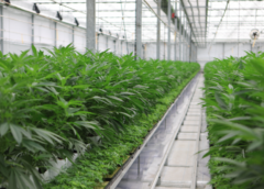 Ontario's pot Crown corporation lost $42 million in latest fiscal year