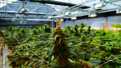 Labatt partners with cannabis producer Tilray to create research joint venture