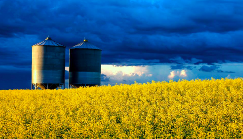 Canola prices rising despite continued trade tensions with China