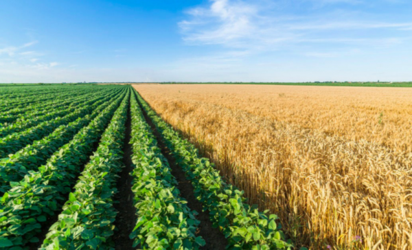 Labour shortages on some Ontario farms threaten crop harvest groups say