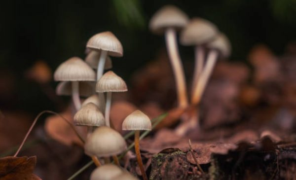 Mydecine Innovations Group included in first-ever psychedelics ETF