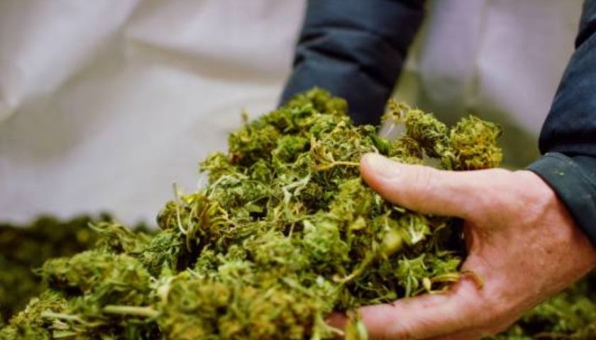 Pure Extracts signs tolling agreement for 500 kgs of CBD rich hemp