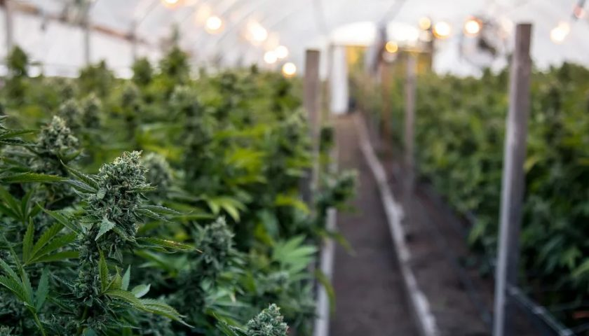 Allied announces clearance from the Colombian authorities to export cannabis products