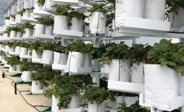 Affinor Growers prepares for vertical farming in Aruba