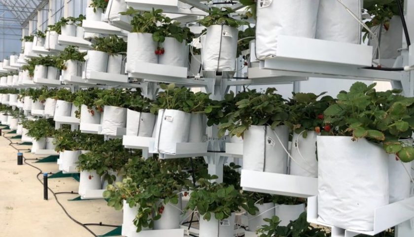 Affinor Growers receives patent for vertical farming towers