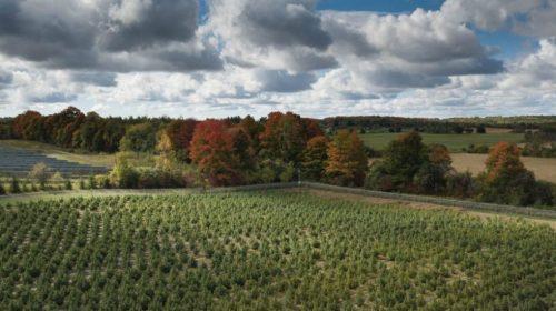 Aleafia Health poised for successful outdoor cultivation season