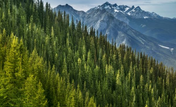 Canada's plan to plant two billion trees