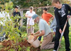 Laurentian Bank partners with Tree Canada to plant 500 trees across Canada